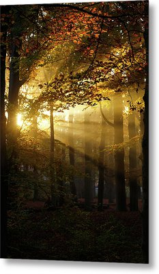 And Then There Was Light - Autumn Forest Metal Print by Roeselien Raimond