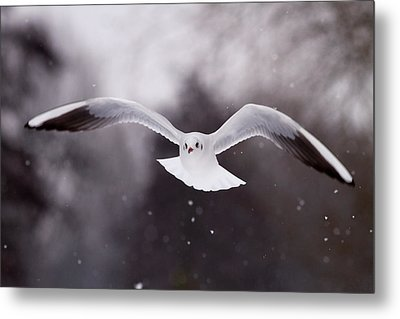 Angel - Gull In The Sky Metal Print by Roeselien Raimond