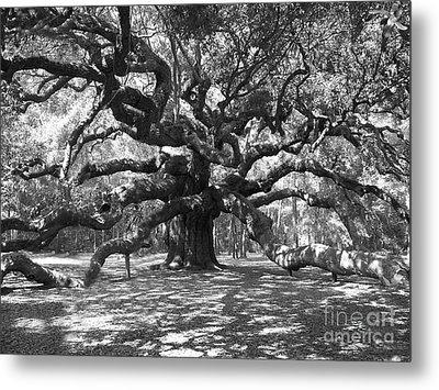 Angel Oak Tree Black And White Metal Print by Melanie Snipes