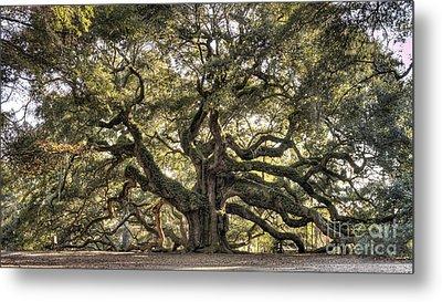 Angel Oak Tree Live Oak  Metal Print by Dustin K Ryan