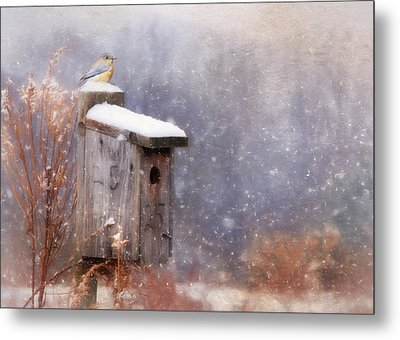 Apartment 25 Metal Print by Lori Deiter