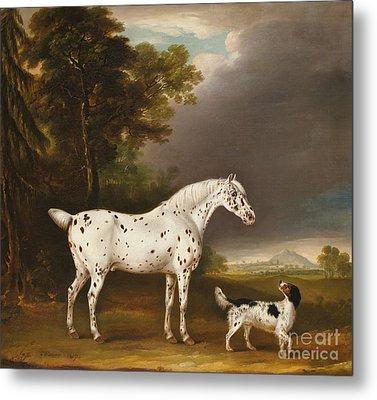 Appaloosa Horse And Spaniel Metal Print by Thomas Weaver