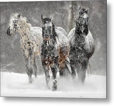 Appaloosa Winter Metal Print by Wade Aiken