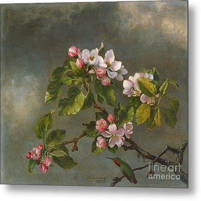Apple Blossoms And Hummingbird 1875 Metal Print by Padre Art