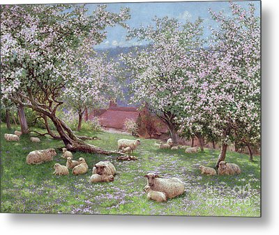 Appleblossom Metal Print by William Biscombe Gardner