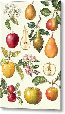 Apples And Pears Metal Print by Elizabeth Rice