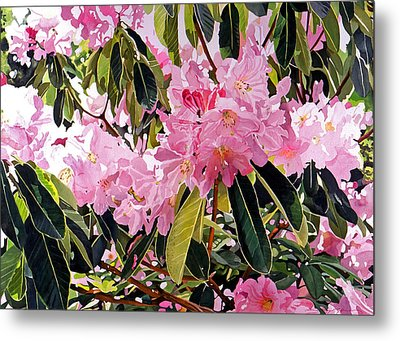 Arboretum Rhododendrons Metal Print by David Lloyd Glover