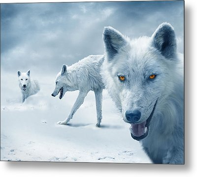 Arctic Wolves Metal Print by Mal Bray