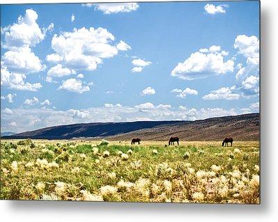 Arizona Desert Horses Metal Print by Ryan Kelly