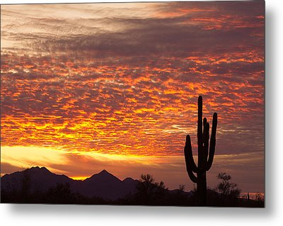 Arizona November Sunrise With Saguaro   Metal Print by James BO  Insogna