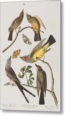 Arkansaw Flycatcher Swallow-tailed Flycatcher Says Flycatcher Metal Print by John James Audubon
