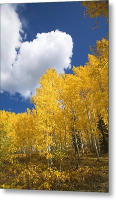 Aspens And Sky Metal Print by Ron Dahlquist - Printscapes