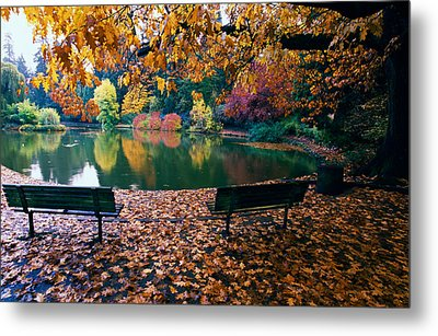 Autumn Color Trees And Fallen Leaves Metal Print by Panoramic Images