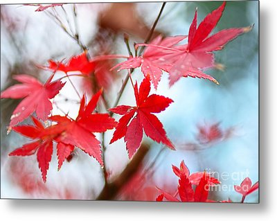 Autumn In The Mist By Kaye Menner Metal Print by Kaye Menner