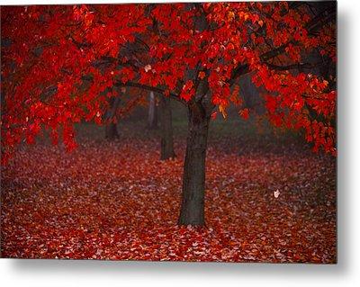 Autumn Metal Print by Jane Melgaard