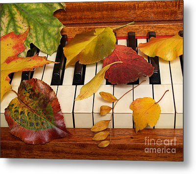 Autumn Leaves Tickle The Ivories Metal Print by Anna Lisa Yoder