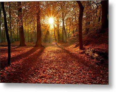 Autumn Magic Metal Print by Roeselien Raimond