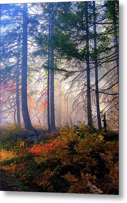 Autumn Morning Fire And Mist Metal Print by Diane Schuster