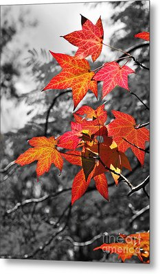 Autumn On Black And White Metal Print by Kaye Menner