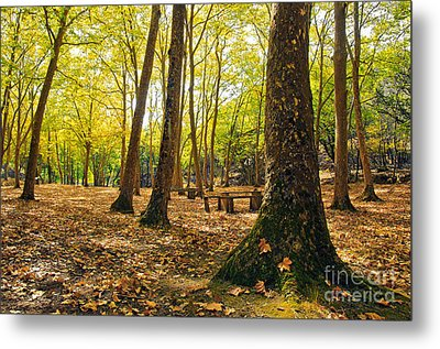 Autumn Scenery Metal Print by Carlos Caetano