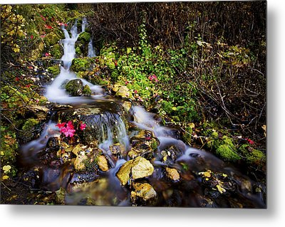 Autumn Stream Metal Print by Chad Dutson