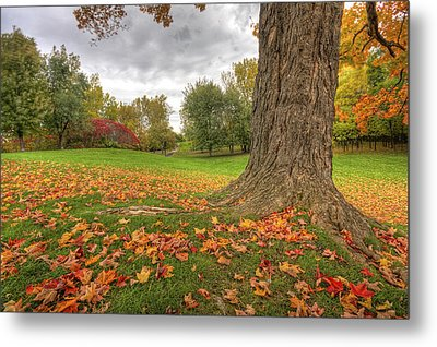 Autumn Tale Metal Print by Mircea Costina Photography