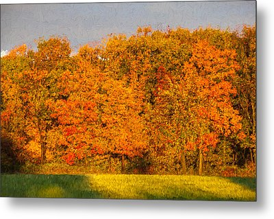 Autumn Trees Metal Print by David Letts