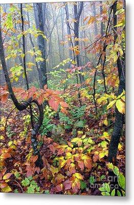 Autumn Woodland Metal Print by Thomas R Fletcher