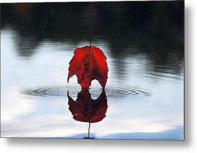 Autumns Final Descent Metal Print by William Carroll