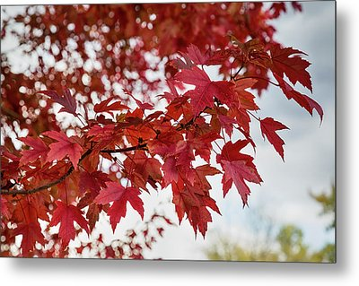 Autumns Red Metal Print by James BO Insogna