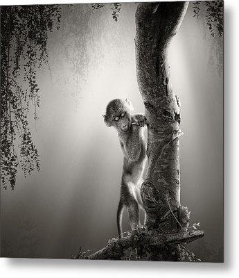Baby Baboon Metal Print by Johan Swanepoel