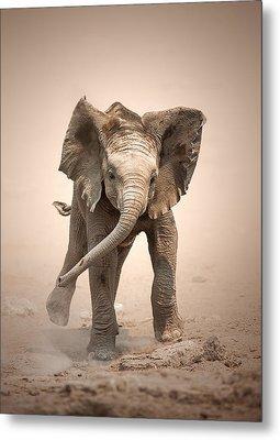 Baby Elephant Mock Charging Metal Print by Johan Swanepoel