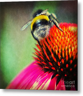 Back Side - Bumble Bee Metal Print by Angela Doelling AD DESIGN Photo and PhotoArt