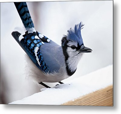Bad Feather Day Metal Print by Al  Mueller