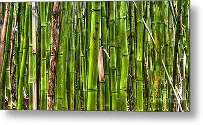 Bamboo Metal Print by Dustin K Ryan
