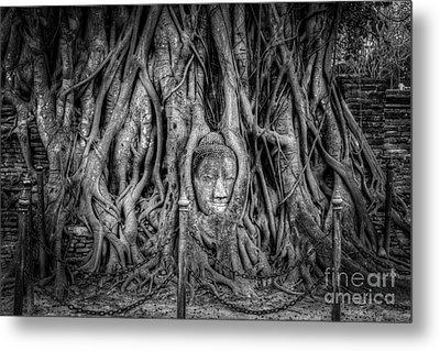 Banyan Tree Metal Print by Adrian Evans