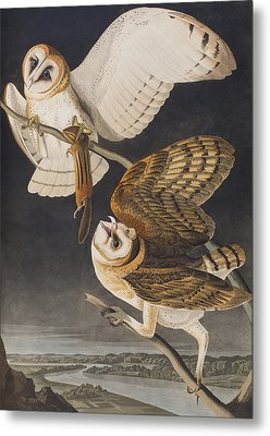 Barn Owl Metal Print by John James Audubon