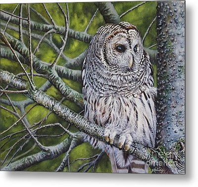 Barred Owl Metal Print by Greg and Linda Halom