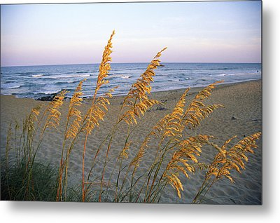 Beach Scene With Sea Oats Metal Print by Steve Winter