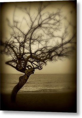 Beach Tree Metal Print by Perry Webster