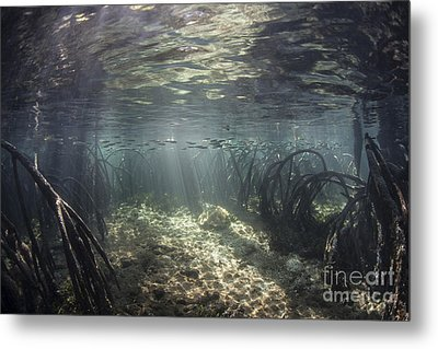 Beams Of Sunlight Shine Metal Print by Ethan Daniels