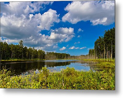 Beautiful Afternoon In The Pine Lands Metal Print by Louis Dallara