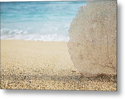 Beautiful Coral Element 1 Metal Print by Brandon Tabiolo - Printscapes