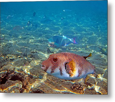 Beautiful Fish. Underwater World.  Metal Print by Andy Za