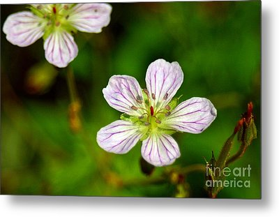 Beautiful Wild Flower Metal Print by Mario Brenes Simon