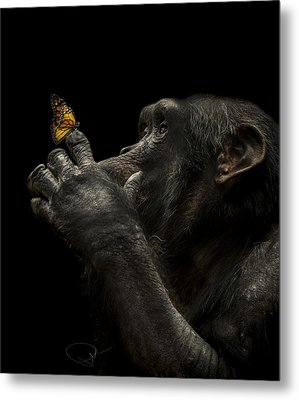 Beauty And The Beast Metal Print by Paul Neville