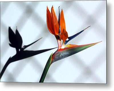 Beauty And The Shadow Metal Print by Terence Davis