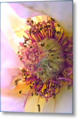 Bedazzled Metal Print by Gwyn Newcombe