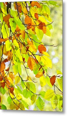 Beech Leaves In Autumn Metal Print by Angela Doelling AD DESIGN Photo and PhotoArt
