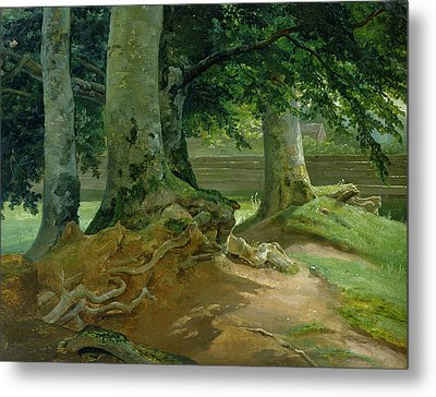 Beech Trees In Frederiksdal Near Copenhagen Metal Print by Christian Ernst Bernhard Morgenstern